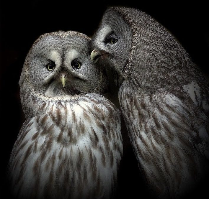 WHISPERING OWLS